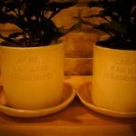 roziniai-vazonao-tevams-silko-keramika