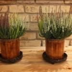 vazonas-augaliukams-silko-keramika